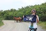 Wild Horses on Vieques National Wildlife Refuge