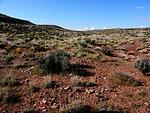 Holmgren milkvetch - habitat (Astragalus holmgreniorum)