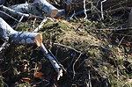 Debris and vegetation (RI)