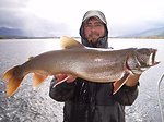 Adult Lake Trout