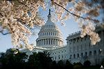 Capitol in Spring - April 2010