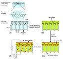 Metal-oxide nanotubes schematic
