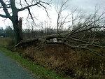 Hurricane Sandy caused damage to Great Swamp National Wildlife Refuge (NJ)