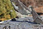 Sundial at USBG National Garden