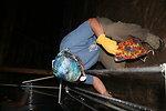 Biologist retrieves bat from harp trap