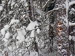 Winter Woodpecker Activity