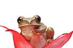 Frog isolated