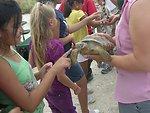 endangered desert tortoise