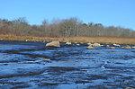Small streams of freshwater at Trustom pond National Wildlife Refuge (RI)
