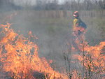 Heat waves during an Iroquois National Wildlife Refuge controlled burn