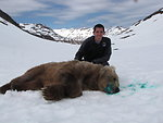 Volunteer Tyler Tran helps with bear captures