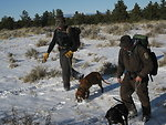 Tracking Mountain Lions