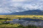 Summer Refuge Wetlands at Lee Metcalf National Wildlife Refuge