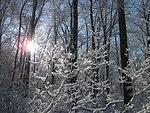 Salt Meadow in winter