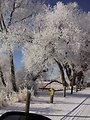 Bowdoin NWR Entrance in the Winter