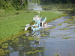Water Chestnut Mechanical Harvesting in 2011