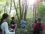 Bog turtle survey team discussing the turtles