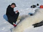 A Polar Bear Biologist Labels Blood Samples from a Bear