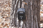 camera on cottonwood tree