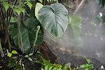 Fern growing in USBG Jungle Room