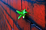 Plant on the brick wall