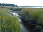 Salt Marsh Creek