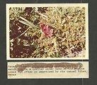 (1970) Alpine Wildflower