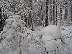 Winter at Seney National Wildlife Refuge