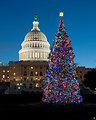 Capitol Christmas Tree 2010