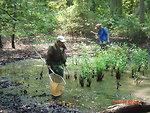 Sampling frogs at Cape May NWR, NJ.