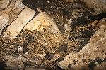Piles of bat bones in Mt. Aeolus Cave