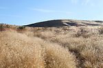 Invasive cheatgrass
