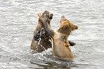 Wildlife of Kodiak Refuge