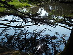 Branched Reflections