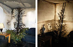 Fire Test; Christmas trees