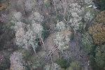 Tree damage at Target Rock National Wildlife Refuge (NY)