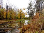 Small wetland area at Reinstein Woods Nature Preserve