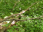 Woodland Understory
