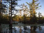 Reflections at Cypress Creek National Wildlife Refuge