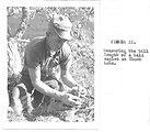 (1961) Measuring Bill Length of Bald Eagle