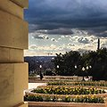 Daffodils in bloom on west terrace of the Capitol.