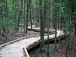 Meandering Trail