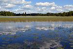 Blue Wetland