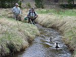 Electrofishing in Rocky Mountain National Park