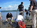 PP 2010 Volunteers Join Indonesians To Replace Mangrove Trees