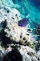 Snorkeling views.