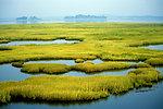 Photo of the Week - Coastal Wetlands (MA)