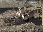 National Black-footed Ferret Conservation Center