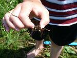 This boy caught a crayfish!