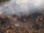 Peat heat